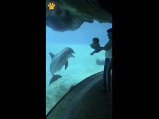 Папа с дочкой смешат дельфина!