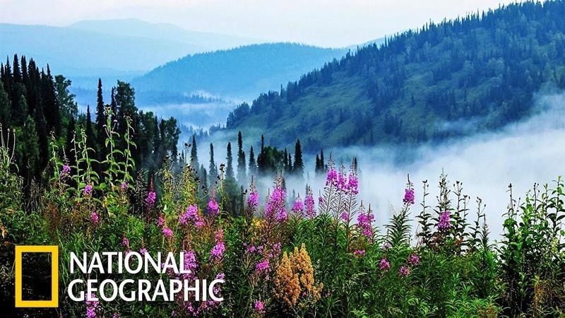 Дикая природа России: Сибирь | Фильм 1 из 6 | (National Geographic)