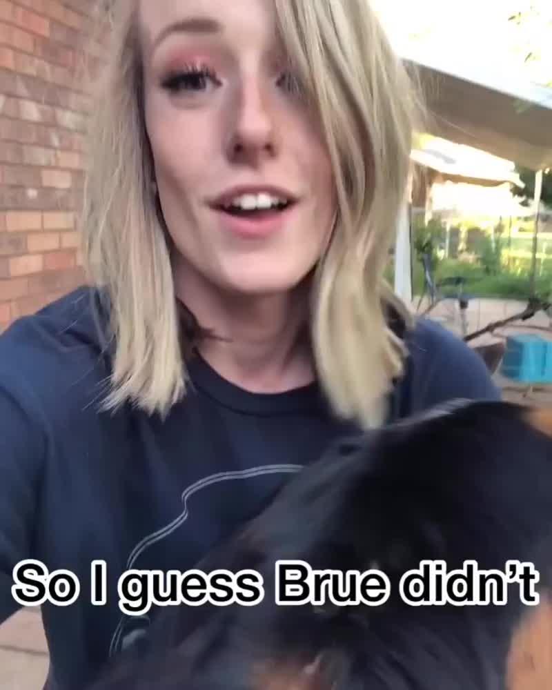Видео дня_ собака не узнала хозяйку после стрижки