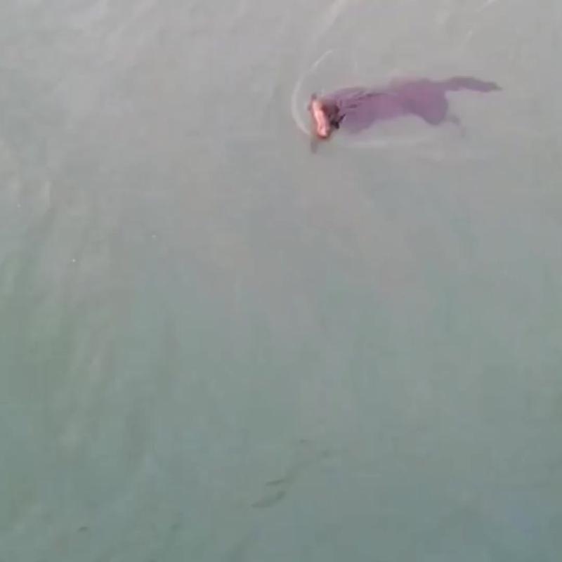 В Таиланде из океана спасли тонущую собаку