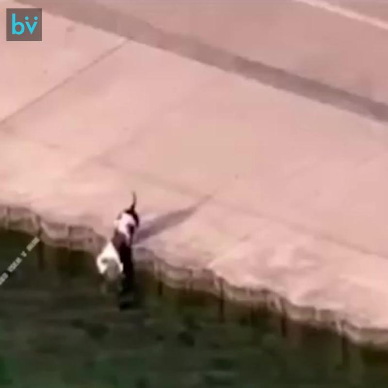 Офицер полиции бросается на спасение собаки, которая хотела попить, но свалилась в воду