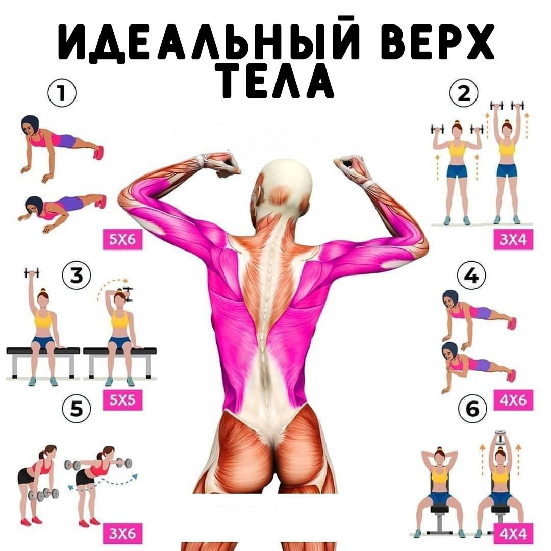 Для формирования красивой пропорциональной фигуры девушкам не стоит избегать тренировок на верх тела