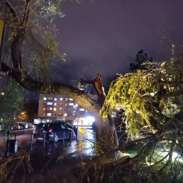 В Калининграде ветер повалил более 20 деревьев – и...