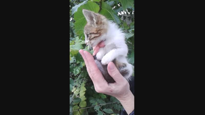 SOS Малыш-котёнок-одноглазик ЖДЁТ САМЫХ ЗАБОТЛИВЫХ ХОЗЯЕВ