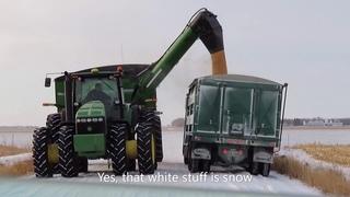 Corn Harvest in December 2019