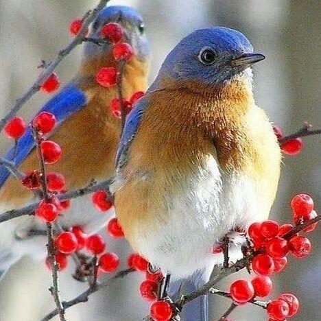 Зима и птицы.