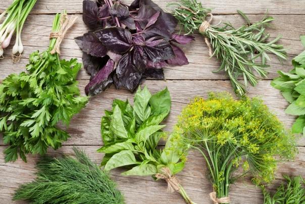 КАКАЯ ЗЕЛЕНЬ САМАЯ ПОЛЕЗНАЯ. ПОЛЬЗА И ВРЕД 1. Базилик отличное противовирусное средство, эффективен при лечении кашля, полезен при астме, стимулирует иммунную систему. Эта трава содержит витамин