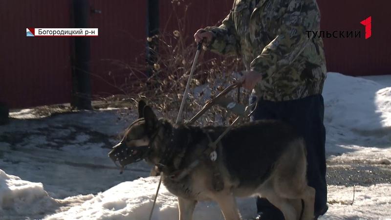В России остро не хватает собак поводырей которых готовят в единственном центре под Москвой