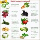 Правила приготовления овощей Сохраняем максимум полезных элементов