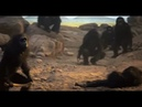 2001, l'Odyssée de l'espace et le singe devint con on Vimeo