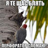Фото Василия Кроликова ВКонтакте