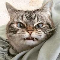 Фотография профиля Влада Канопки ВКонтакте
