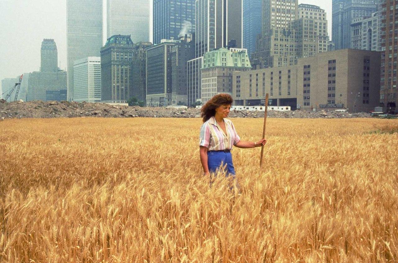 Пшеничное поле, Нью-Йорк, 1982