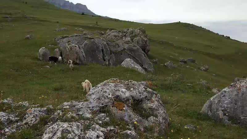 Экскурсьён дэ ля собакен