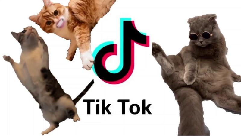 КОТИКИ ТИК ТОК CATS TIK TOK ГОВОРЯЩИЕ КОТЫ TALKING CATS