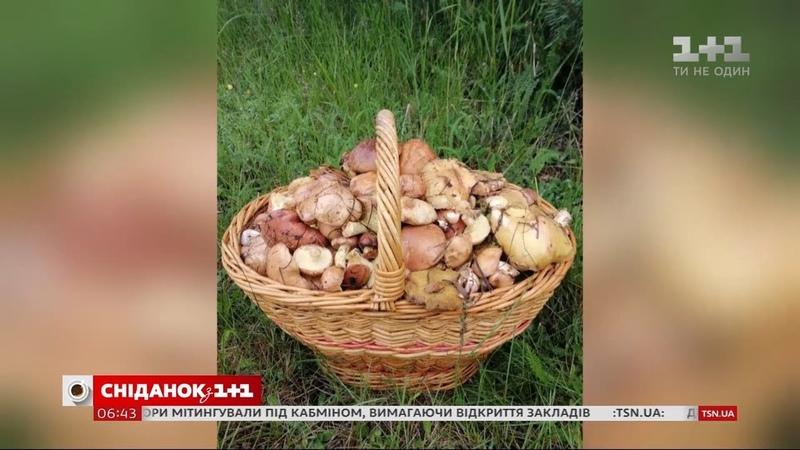 Сезон грибів чим корисні перші гриби та на що варто звертати увагу, коли їх збираєте
